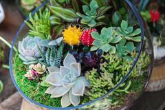Terrarium with cactus succulent plant Stock Photos