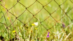Flowers Next to a Metal Gate Stock Footage