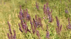 Soft Purple Flowers With Bee Stock Footage