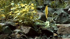 Stingy Nettles Blowing in the Wind Stock Footage