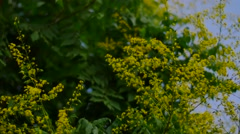 Yellow Flowers with Bees Stock Footage