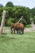 Elephant playing in its enclosure - stock photo
