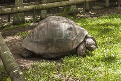Big turtle in its enclosure - stock photo