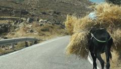 traditional transport of hay with a donkey in Greek island - stock footage