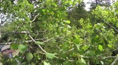 Recreational camera drone quadcopter crashing in a tree Stock Footage