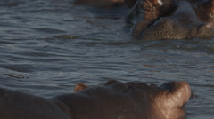 A Hippo with eyes closed in the water Stock Footage