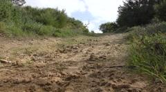 Woman walking dogs in park sandy path - stock footage