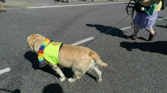 Dog at Gay pride parade in Stockholm Stock Footage