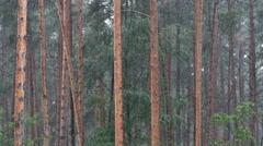 Bikernieki memorial forest in the rain Latvia Stock Footage
