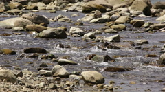 Fast mountain river with stones Stock Footage