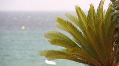 Cycas dancing in the wind Stock Footage