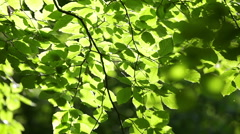 Green leafs background - stock footage