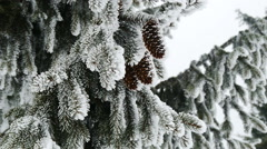 Pine. Winter landscape with snow in mountains Carpathians - stock footage