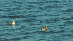 Two seagulls floating in the sea Stock Footage