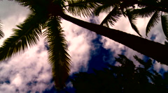Palm tree and clouds on a beautiful sunset Stock Footage