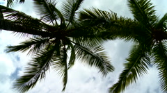 Beautiful palm trees with clouds - stock footage