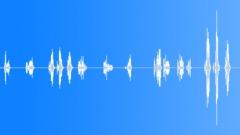 Bird Chirping Sound Effect