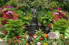Colorful tropical garden Stock Photos