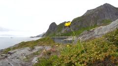 Norway lofoten in summer Stock Footage