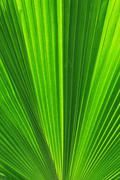 Palm trees leaves Stock Photos