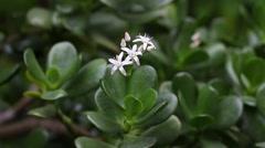Beautiful delicate flower Stock Footage
