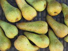 Close-up of ripe pears in box Stock Photos