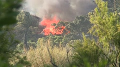 Building on fire through trees Stock Footage