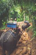 Elephant Trekking Through Jungle in Northern Thailand Stock Photos