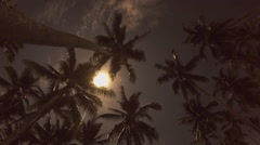 Night Sky with Stars and Moon over Tropical Palm Trees. Timelapse Stock Footage