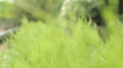 natural green background with selective focus - stock footage