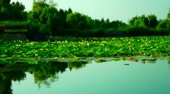 Serene Lacustrine Landscape With Lotus Leaves - stock footage