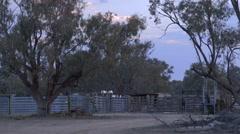 Australian cattle farming station stock yards dusk, birds on fences Stock Footage