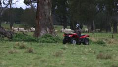 Quad bike rider wearing safety helmet on sheep farm Stock Footage