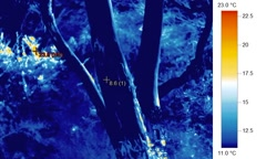 Trees, track left to right in infrared thermographic video - thermal imaging Stock Footage