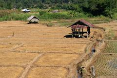 Rice Field in Northern Thailand Stock Photos