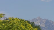 Tree and a Mountain in a Light Breeze on a Hot Summer Day Stock Footage