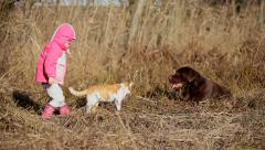 Little girl playing with a Brown Labrador retriever and a yellow cat in winter Stock Footage