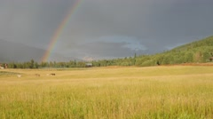 Grass Field With Rainbow Stock Footage