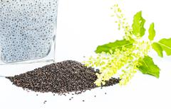 Stock Photo of Gelatinous basil seeds for health