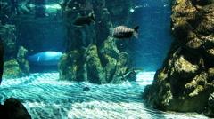 Manatees in the aquarium Stock Footage