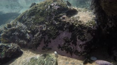 Fish swimming in Natural rock pool Stock Footage