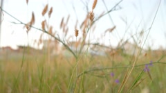 Dry desert grass in Crimean peninsula area Stock Footage