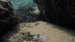Underwater Footage of Fish in Rock pool Stock Footage