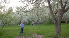 Boy Wandering among Blooming Trees - stock footage