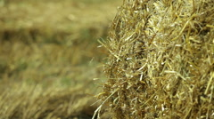 Sheaves of hay in a field Stock Footage