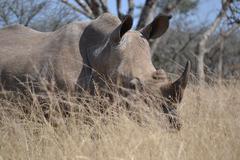 Rhino in the grass Stock Photos