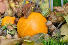 autumnal garden - stock photo