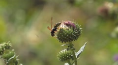 Wild flowers and insects,field, macro Slow Motion Stock Footage