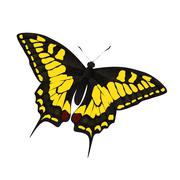 Butterfly Vector Illustration - stock illustration