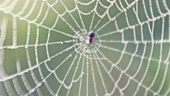 Spider's Web in the field close-up Stock Footage